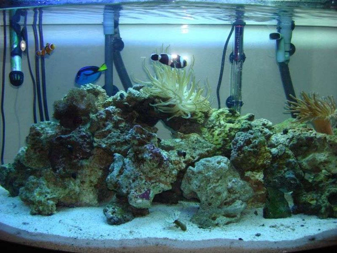 46 gallons reef tank (mostly live coral and fish) - 46 gal bow front reef