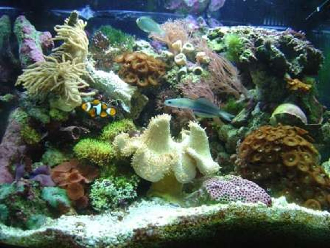 29 gallons reef tank (mostly live coral and fish) - my cube