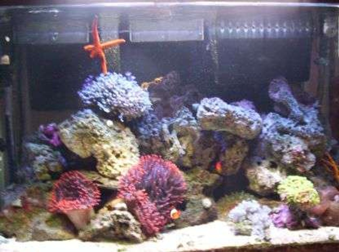 100 gallons reef tank (mostly live coral and fish) - customer tank