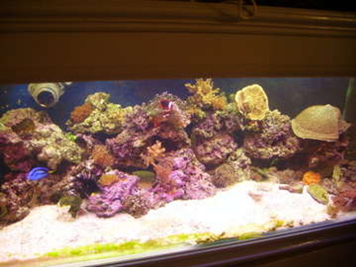 75 gallons reef tank (mostly live coral and fish) - unfortunately this tank broke a few days ago. but luckily i manged to save all live stock and they are now in a 100 gal setup. pics to come...