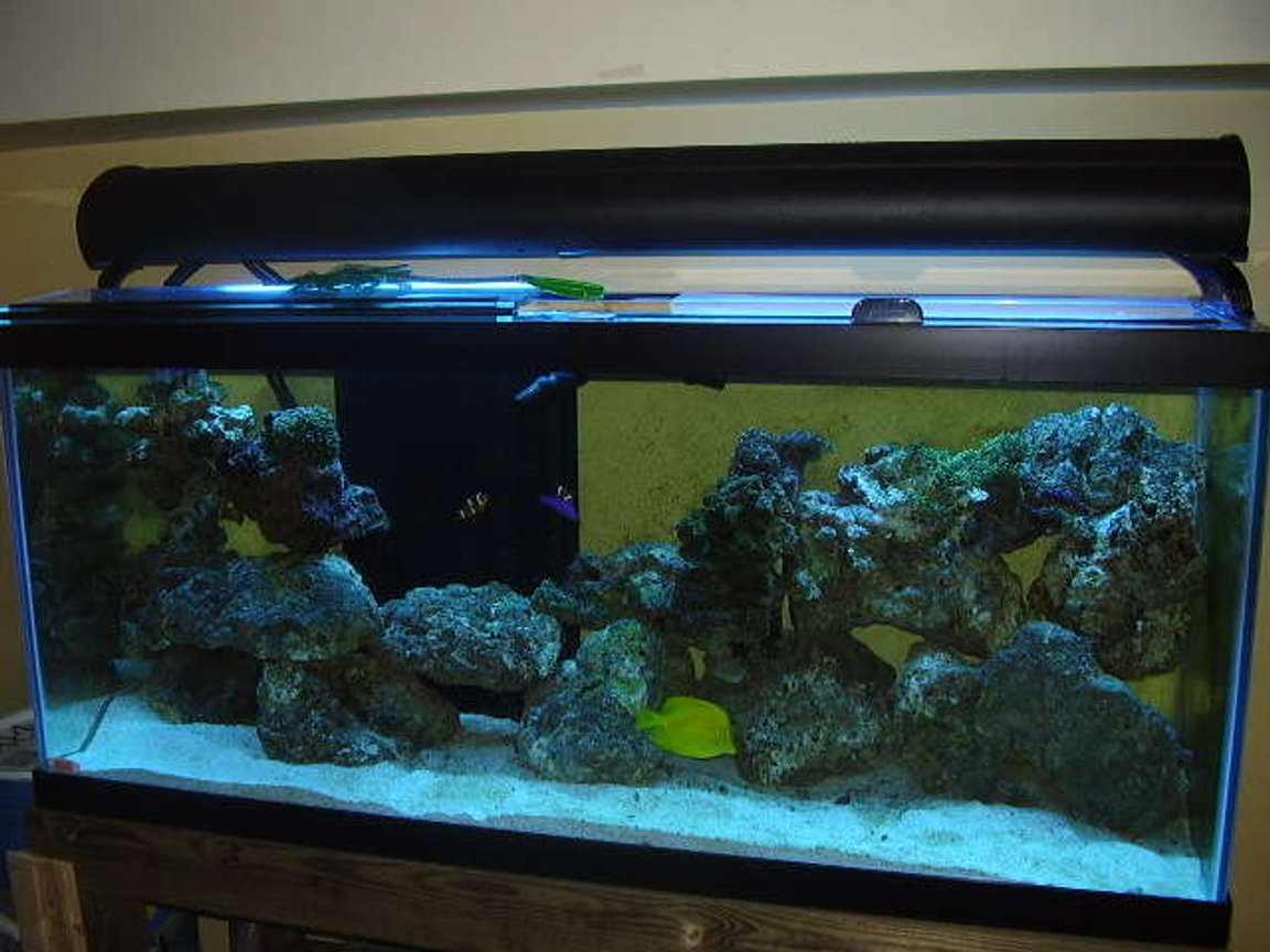 75 gallons reef tank (mostly live coral and fish) - With just the atinics on