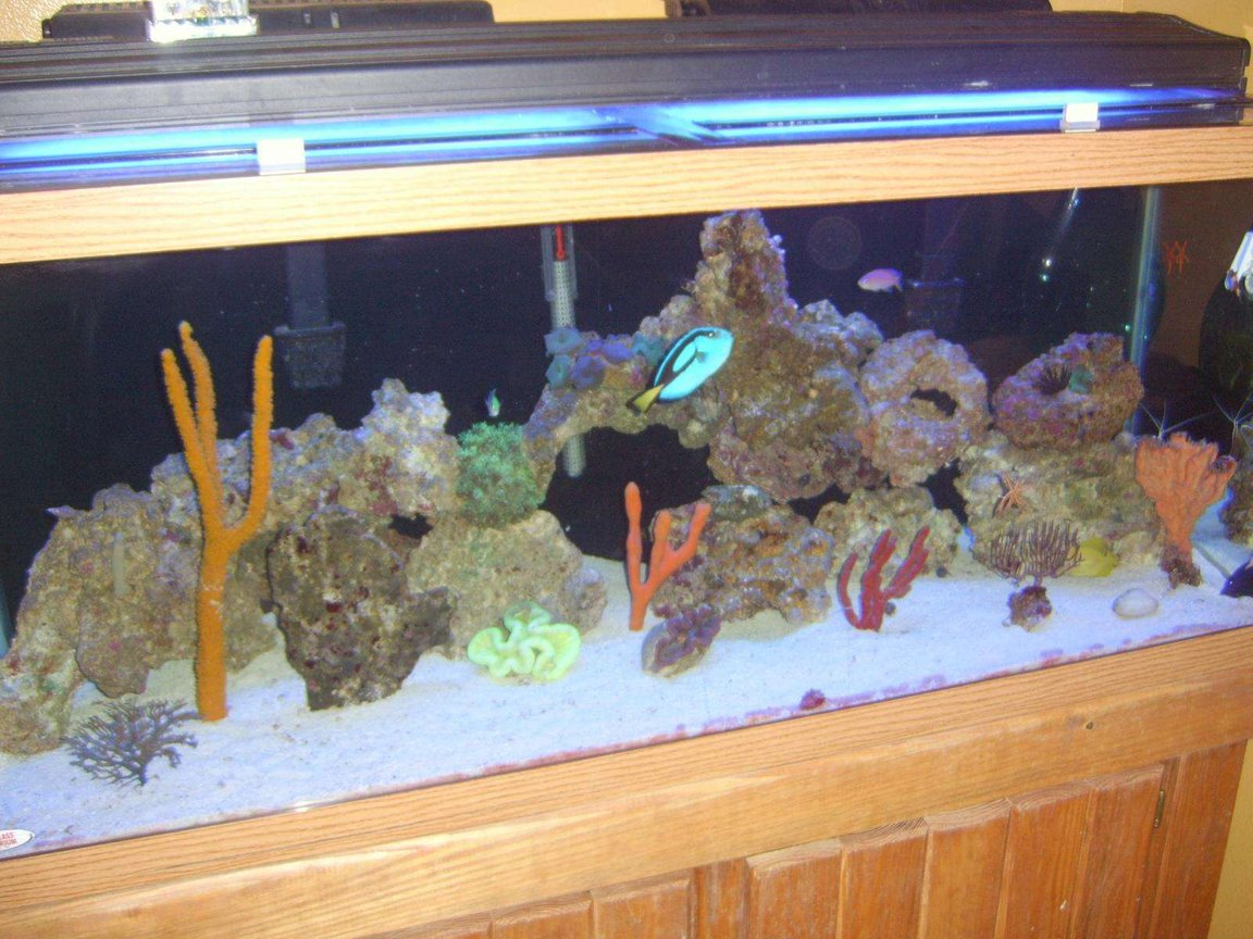 95 gallons reef tank (mostly live coral and fish) - ...