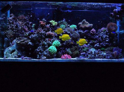 90 gallons reef tank (mostly live coral and fish) - My 90 gallon reef!