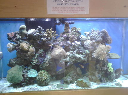 90 gallons reef tank (mostly live coral and fish) - 1 of our many reef display tanks 90 gallons
