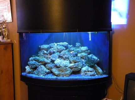 54 gallons reef tank (mostly live coral and fish) - 54 gallon corner reef tank