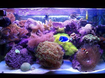 58 gallons reef tank (mostly live coral and fish) - 58 gal mixed reef, around 1 year old...