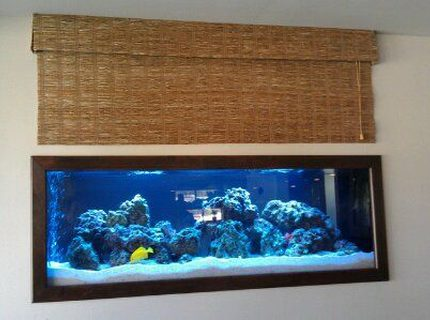 140 gallons reef tank (mostly live coral and fish) - 125 Gallon Saltwater Tank by Sunset Aquatics