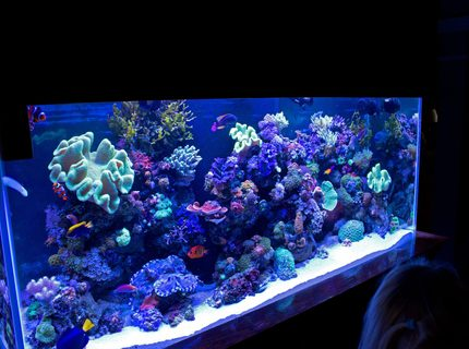 140 gallons reef tank (mostly live coral and fish) - FTS