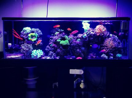 Rated #10: 60 Gallons Reef Tank - Full tank shot