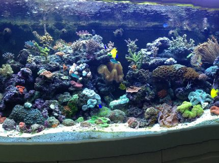 Rated #4: 65 Gallons Reef Tank - My tank