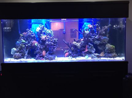 500 gallons reef tank (mostly live coral and fish) - My living room
