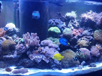 Rated #9: 90 Gallons Reef Tank - 90 gallon reef