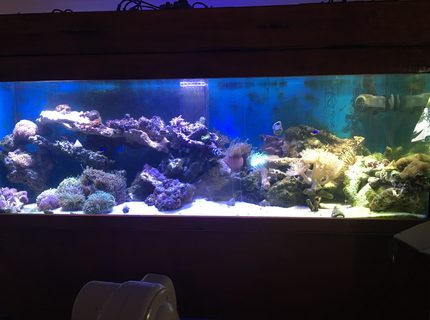 160 gallons reef tank (mostly live coral and fish) - My sps dominant reef tank 6x2x2 with 6x14x18 sump