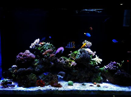 150 gallons reef tank (mostly live coral and fish) - My Tank 150G