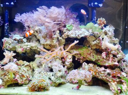 Rated #8: 20 Gallons Reef Tank - Upclose