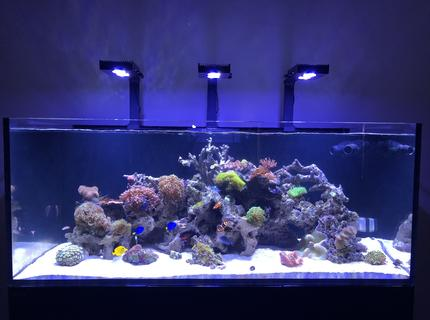 New reef pic