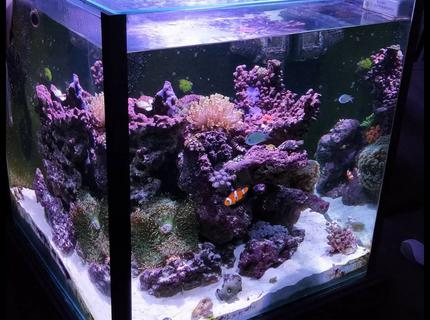 Rated #5: 52 Gallons Reef Tank - Cube corner tank