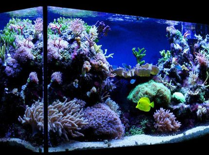 Rated #7: 100 Gallons Reef Tank - My 100 gallon (375L) reef tank.