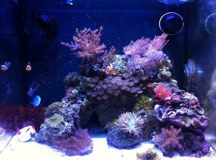 14 gallons reef tank (mostly live coral and fish) - Biocube 14