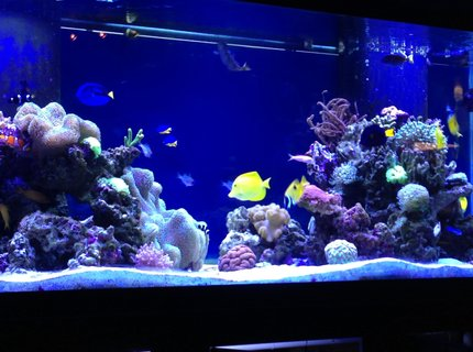 210 gallons reef tank (mostly live coral and fish) - 210 gallon display, 70 gallon sump, led lights