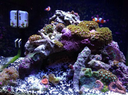 14 gallons reef tank (mostly live coral and fish) - Here is my 14 gallon biocube and it's about 5 months old