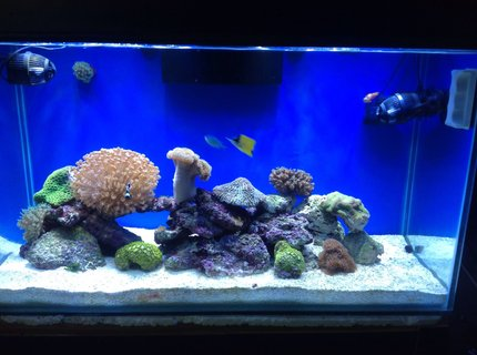 80 gallons reef tank (mostly live coral and fish) - 80G reef tank