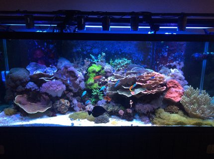 210 gallons reef tank (mostly live coral and fish) - 210 gallon mixed reef.