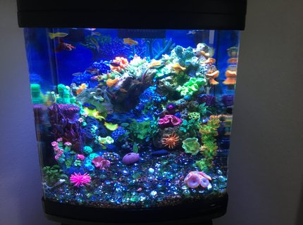 28 gallons reef tank (mostly live coral and fish) - Freshwater reef.