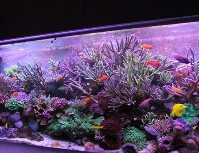 220 gallons reef tank (mostly live coral and fish) - yoda's tank