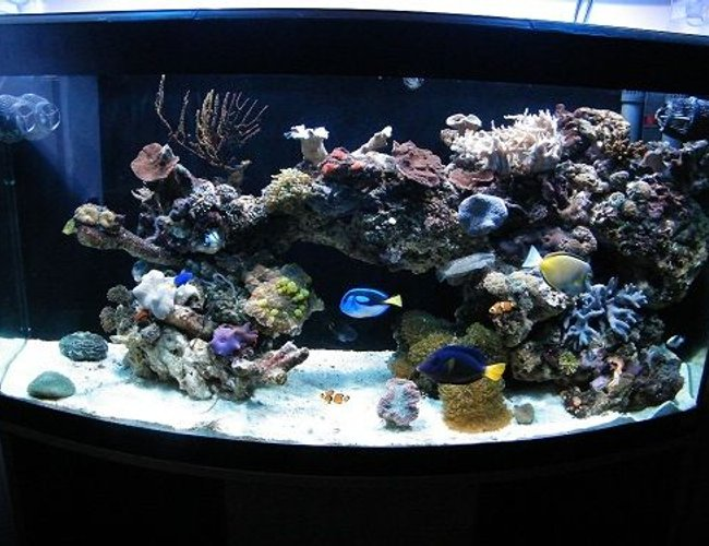 78 gallons reef tank (mostly live coral and fish) - Front View