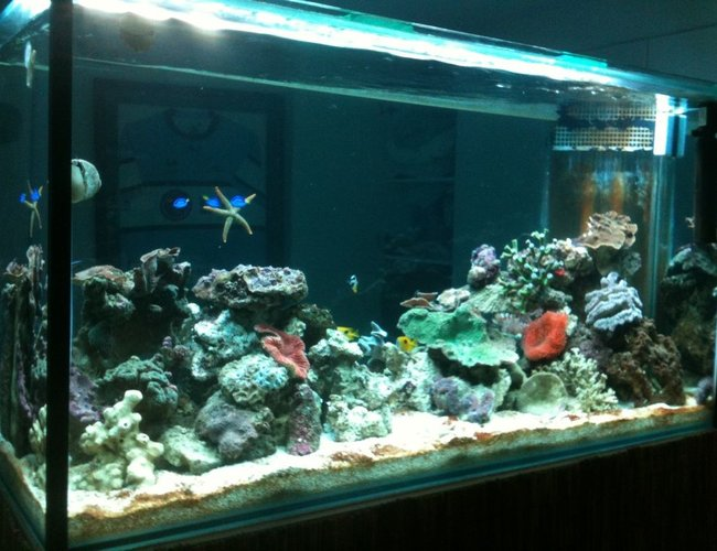 275 gallons reef tank (mostly live coral and fish) - 800L reef tank