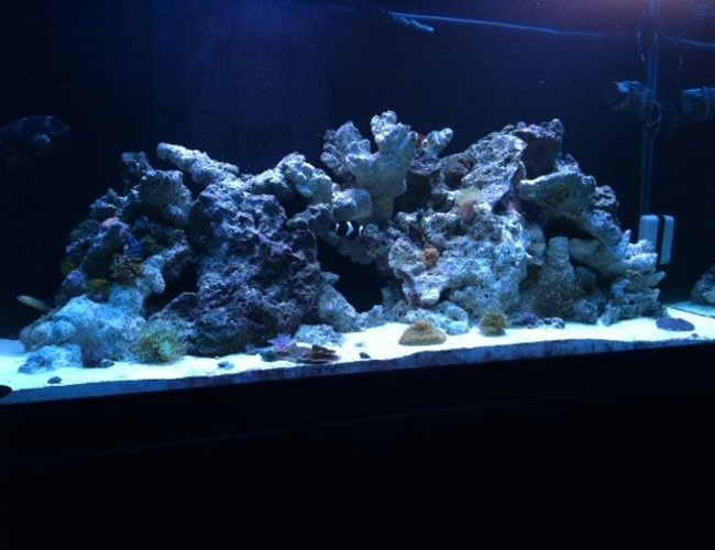 90 gallons reef tank (mostly live coral and fish) - Nothing like the ocean in your living room