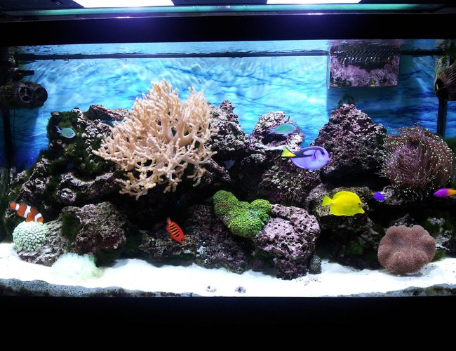 90 gallons reef tank (mostly live coral and fish) - Under the sea, in the living room.