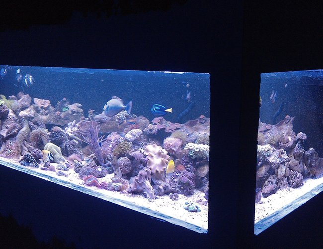550 gallons reef tank (mostly live coral and fish) - 8' long 4' wide plywood tank