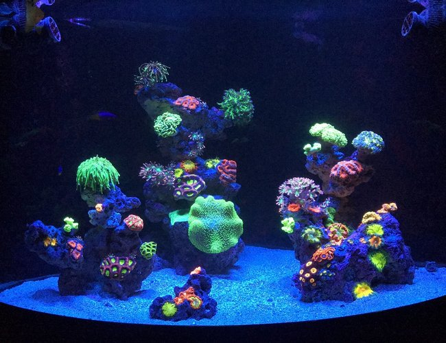 54 gallons reef tank (mostly live coral and fish) - 54 corner