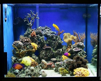 Rated #40: 35 Gallons Reef Tank - Tank as of Jan 2008 - AM Chromis with new mce600 skimmer and 250w halide