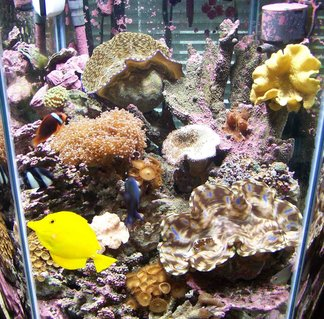 Rated #88: 60 Gallons Reef Tank - 60 gal hex