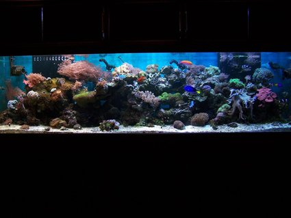 Rated #39: 240 Gallons Reef Tank - full tank shot