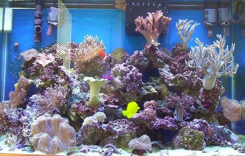 Rated #89: 65 Gallons Reef Tank