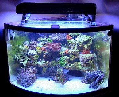 Rated #86: 36 Gallons Reef Tank - Full Tank Shot
