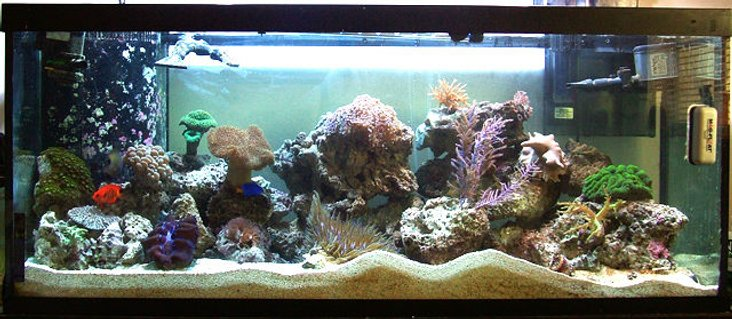 Rated #83: 75 Gallons Reef Tank - Overall aquarium photo