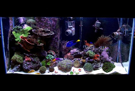 Rated #54: 90 Gallons Reef Tank - 90g AGA MegaFlow
