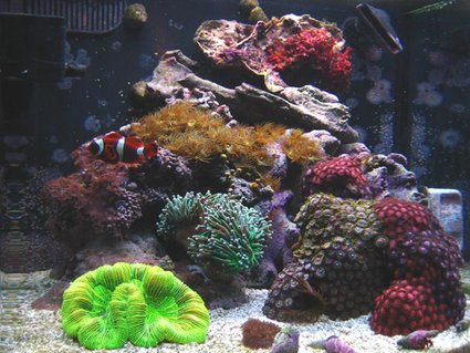 Rated #55: 12 Gallons Reef Tank - 12 Gallon Nano Reef