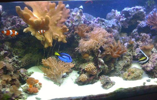 Rated #51: 400 Gallons Reef Tank - my 4ft reef so far.