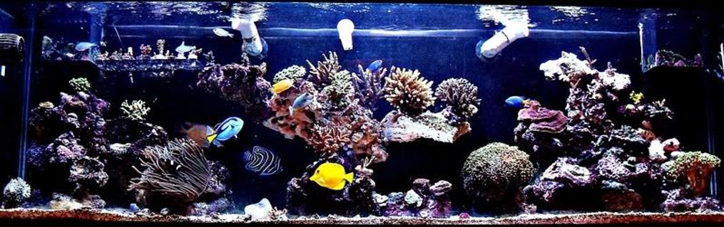 Rated #3: 125 Gallons Reef Tank - ~125 Gallon SPS Dominant Predator Reef ~