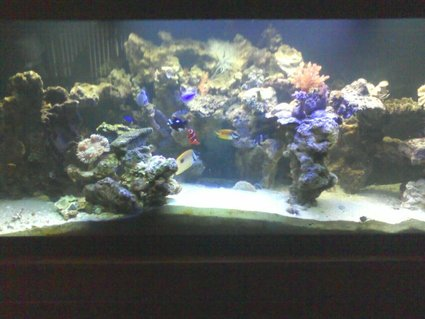 Rated #86: 125 Gallons Reef Tank - everybody hanging out