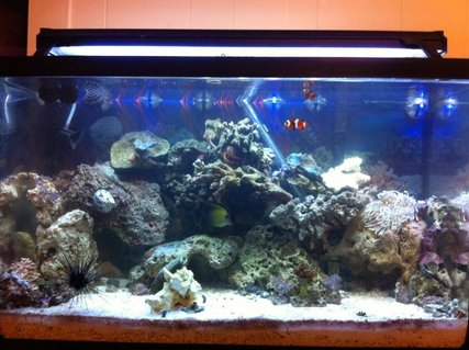 Rated #70: 29 Gallons Reef Tank - my 29 gallon tank