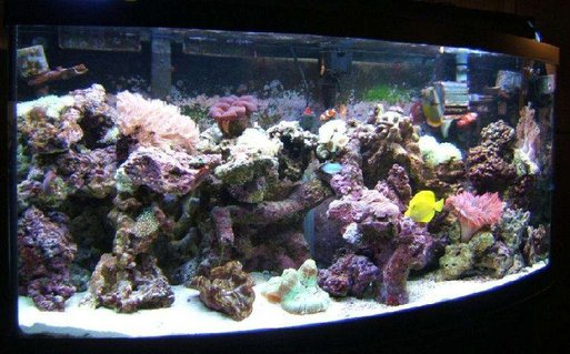 Rated #59: 72 Gallons Reef Tank - Makes you wonder why there is something rather than nothing.