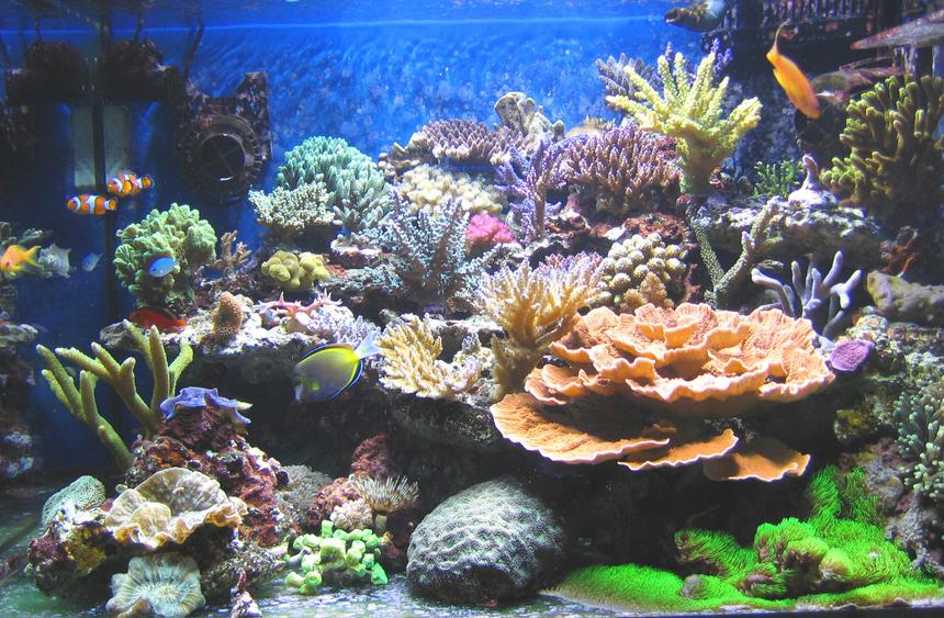 Rated #1: 100 Gallons Reef Tank - After 6 months..