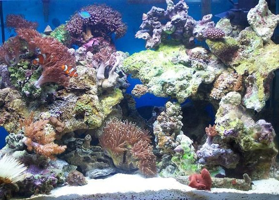 Rated #41: 20 Gallons Reef Tank - 20 gallon reef tank